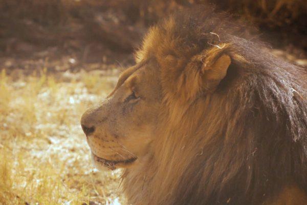 LIBERTAI uma historia africana curta documentario dumela filmes 04 600x400 - Libertai (short documentary)